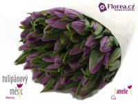 Amelie benefice tulipanovy mesic